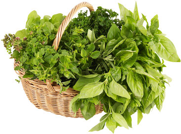 fresh-herb-basket